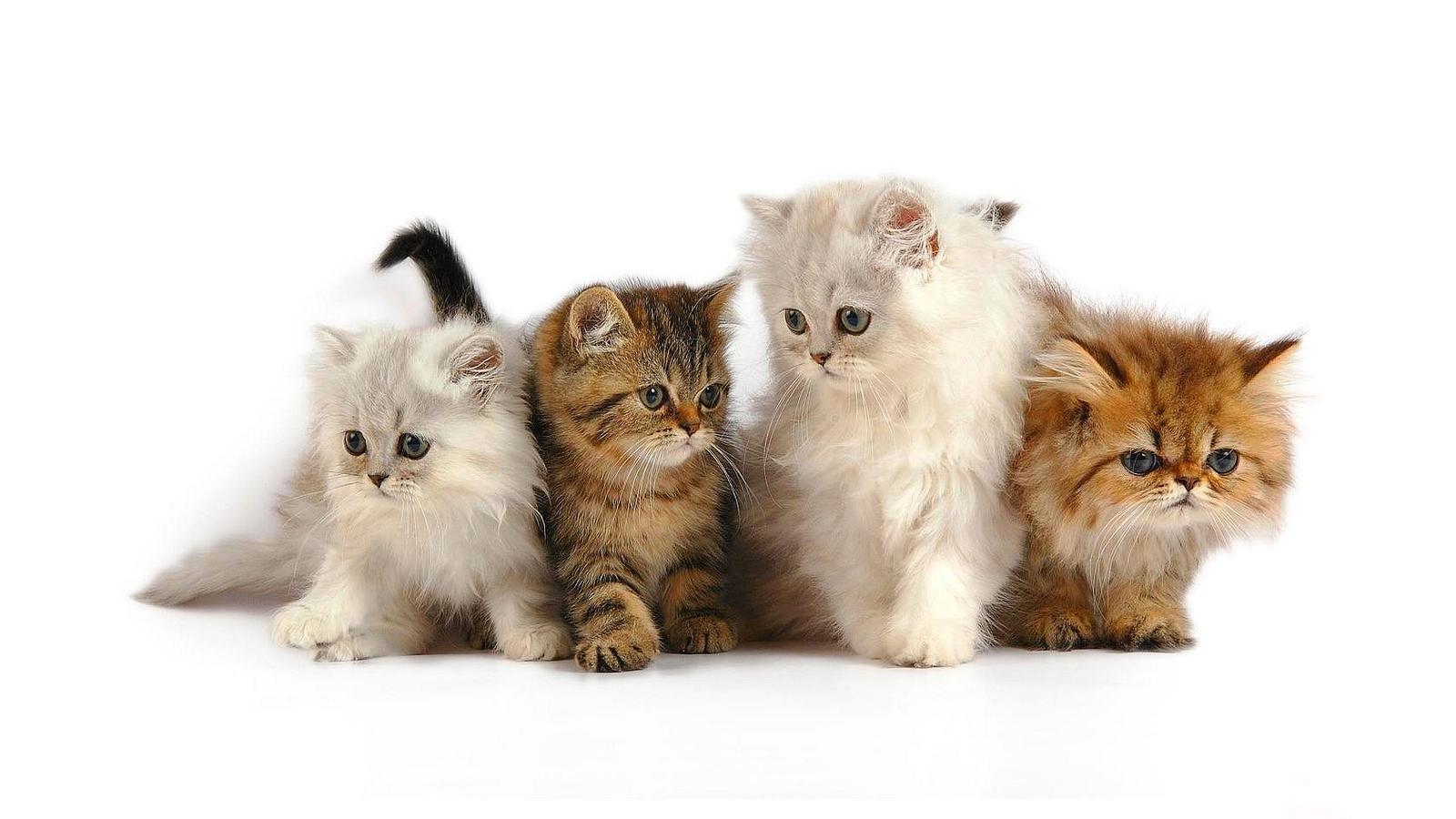 kitten5